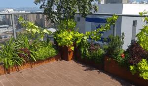 עץ תפוז וצמחייה רב שנתית במרפסת