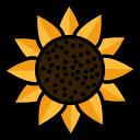 השילובים הכי טובים לשמש וצל
