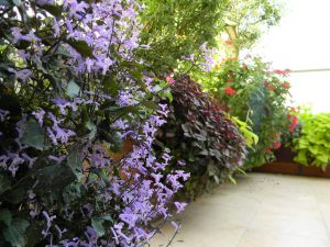 עיצוב צמחיה במרפסת קטנה