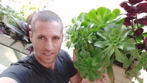 צמחים למרפסת צפונית בלי שמש ישירה