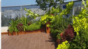 צמחים מתאימים למרפסת שמש דרומית