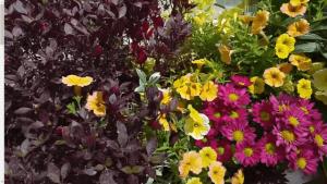 צמחים מתאימים למרפסת שמש מזרחית
