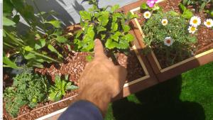 צמחים מתאימים למרפסת שמש מערבית