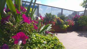 איך בונים גינה במרפסת לפי שלבים