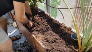 למה צמחים חדשים מתים אחרי כמה ימים באדנית עם אדמה קיימת?