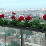 הצמחים המומלצים לעיצוב גינה במרפסת – אדניות לצל מלא ושמש מלאה