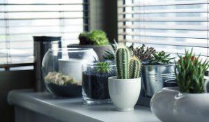 גידול צמחים בתוך הבית