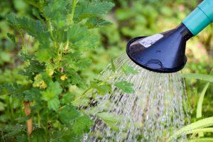 השקיה של אדניות