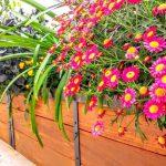 צמחים מומלצים לשתילה במרפסת או בגינה באביב ובקיץ