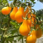 המדריך לגידול ירקות ובניית גינת ירק בשיטת עשה זאת בעצמך – במרפסת ובגינה