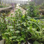 מדריך לבחירת צמחים מהמשתלה