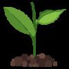 התאמת צמחים