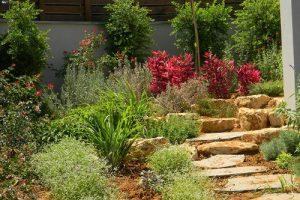 הקמת גינות מעוצבות והתאמת צמחייה