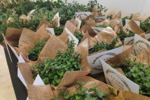 סדנאות צמחים וגינון בחברות וארגונים